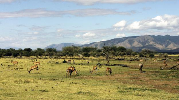 Lunch at Lake Manyara (Credit: Joseph Eid/AFP/Getty)