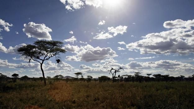 Solitude on the savannah (Credit: Joseph Eid/AFP/Getty)