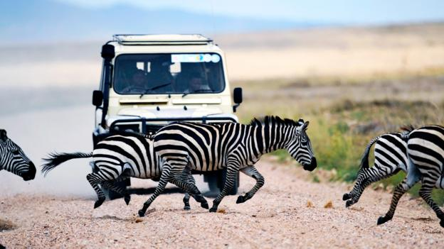 Zebra crossing (Credit: Tony Karumba/AFP/Getty)