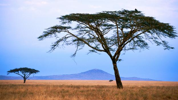 A tree grows in Tarangire (Credit: Judy Bellah/Getty)