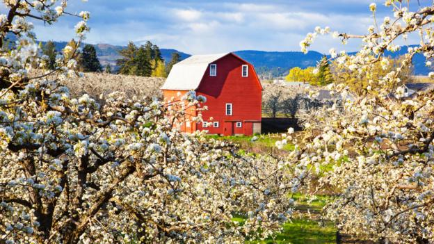 An all-American apple farm (Credit: Craig Tuttle/Design Pics/Getty)