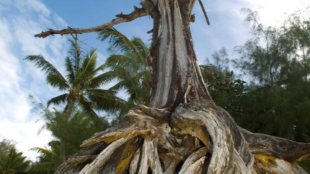 Tangled tree roots (Credit: Marty Melville/AFP/GettyImages)