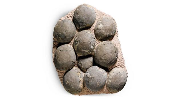 Dinosaur eggs prized by collectors (Credit: Sotheby's)