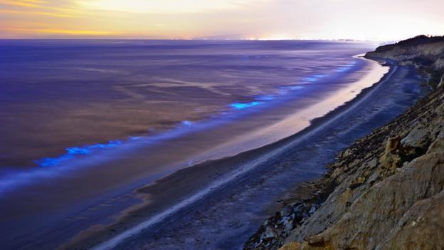 Bizarre bioluminescence off a San Diego beach (Credit: Alexander S Kunz/Getty)