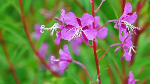 Valais flora (Credit: Amanda Ruggeri)