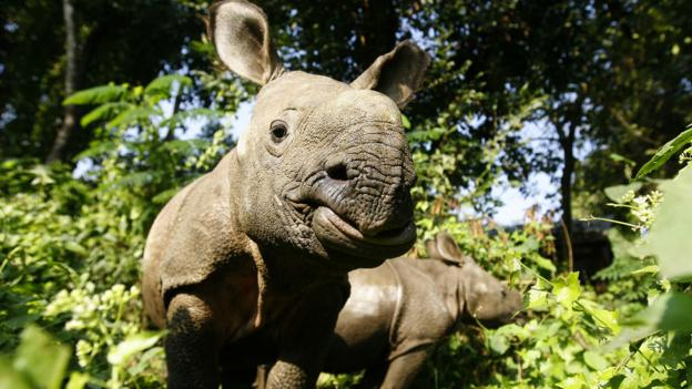 Baby rhino (Credit: Prakash Mathema/AFP/Getty)