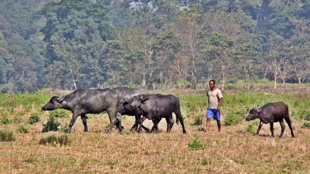 Farming on the edge of Chitwan (Credit: Nellie Huang)