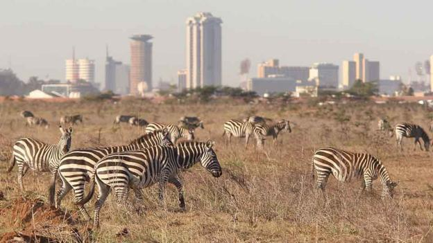 Nairobi National Park (Credit: Getty Images)