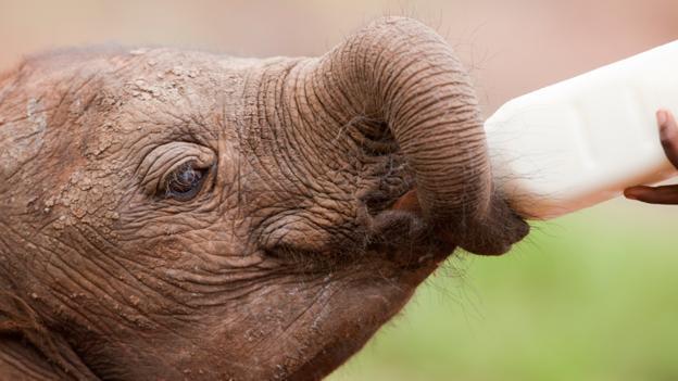 David Sheldrick Elephant Orphanage (Credit: Denis-Huot/Hemis.fr/Getty)