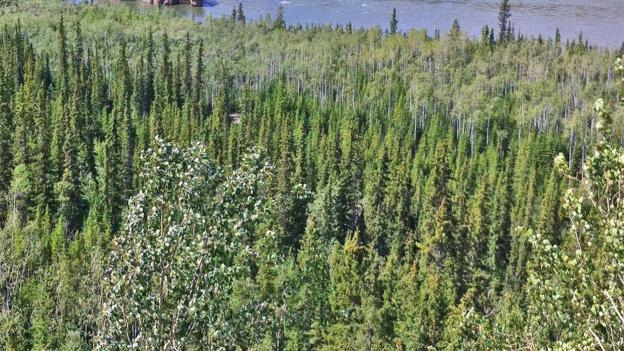 The wild Yukon River (Credit: Brendan Sainsbury)