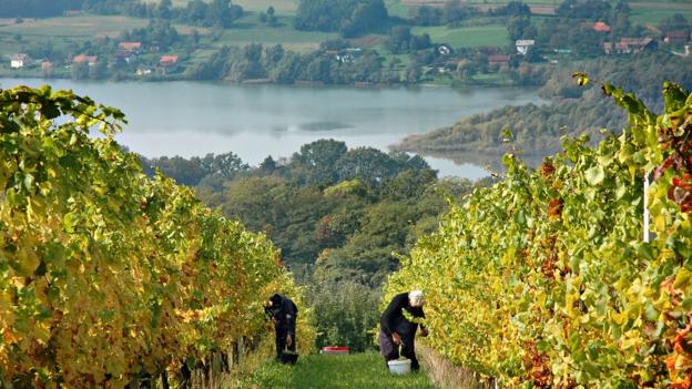 Passing vineyards in Slovenia (Credit: Slovenia Tourism Board)