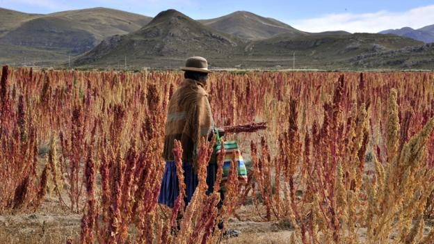 An Aymara woman walks along a quinoa plantation in southern Bolivia (Credit: Aizar Raldes/AFP/Getty)