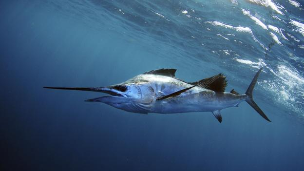 Bbc Future The Car Designer Who Turned A Sailfish Into