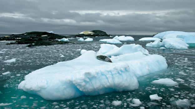 Antarctica's icebergs (Credit: Daniel Noll)