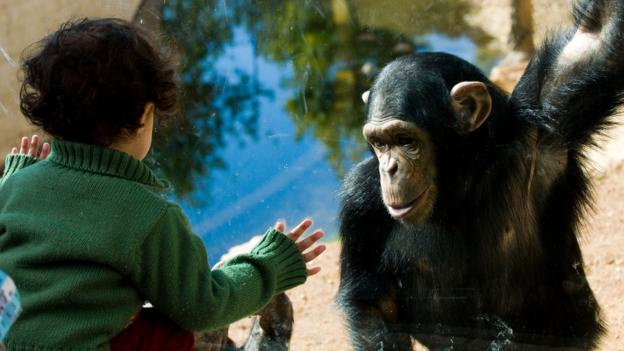 There is little distance between toddlers and chimps (Credit: Boaz Rottem / Alamy)