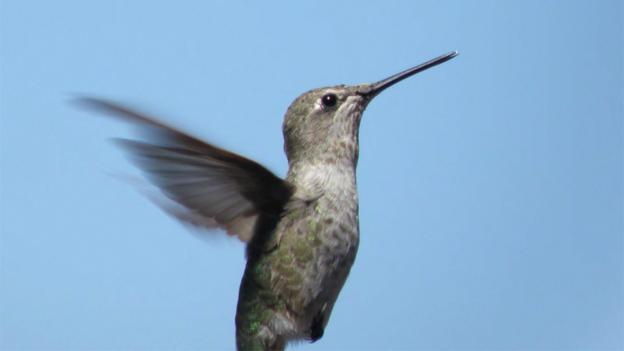 Hummingbird Aerodynamics: Unique, Precise and Lighter Than Air