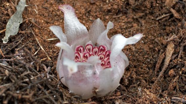 soil water plant relationship wikipedia en