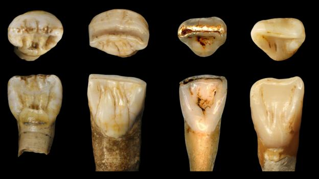 The far left are from the Xujiayao cave while the far right are modern human