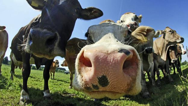 Will we ever eat genetically modified meat?