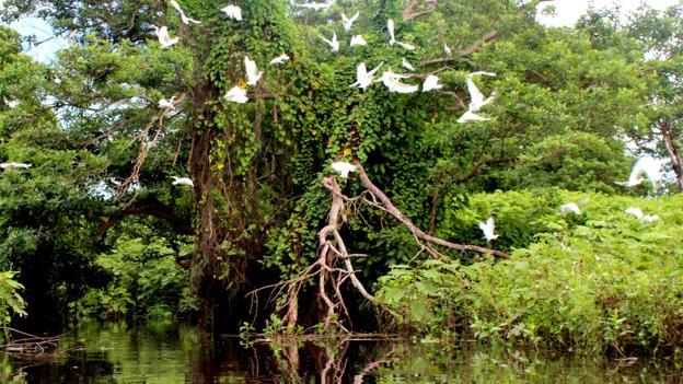 Birds fly over Rio Istiam (Credit: Credit: Sarah Shearman)