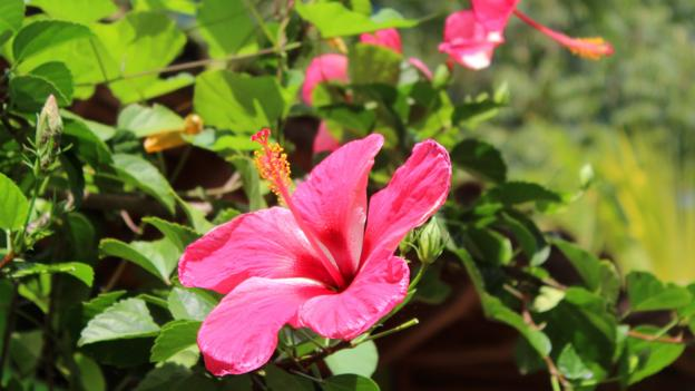 Flora and fauna on the island (Credit: Credit: Sarah Shearman)