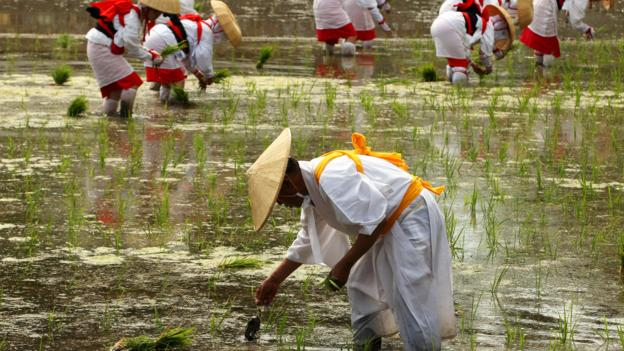 A rice planting ritual in Osaka (Credit: Credit: Buddhika Weerasinghe/Getty)