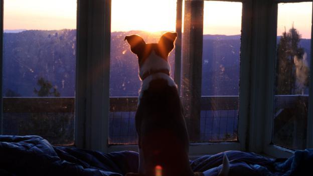 Jackson enjoying the blood-red sunrise (Credit: Credit: Britany Robinson)