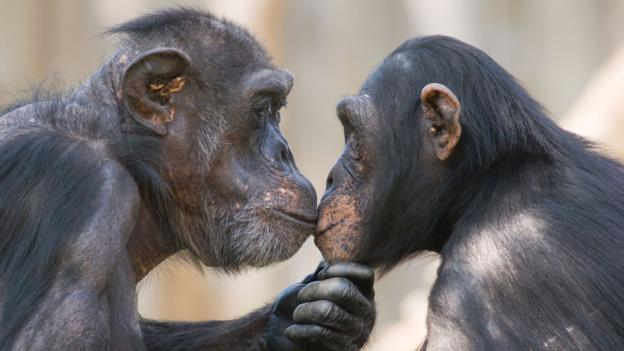 Why Do Humans Kiss 2
