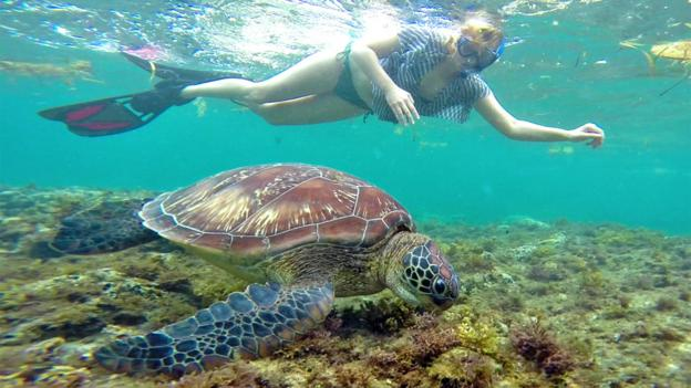 Making friends with turtles in the Philippines (Credit: Credit: Sabrina Iovino)