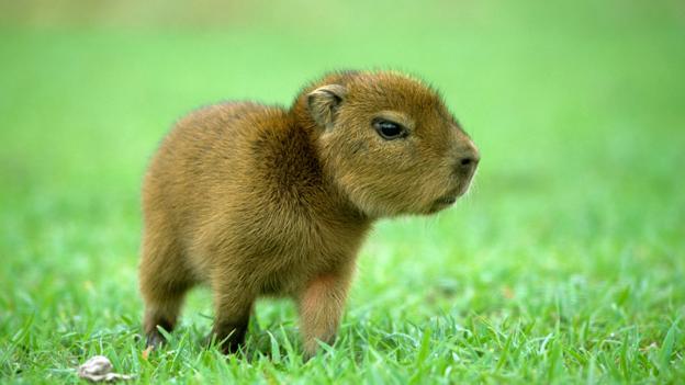 BBC - Earth - The world's cutest animals