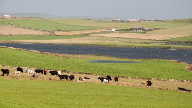 A peaceful view of Orkney (Credit: Credit: Amanda Ruggeri)