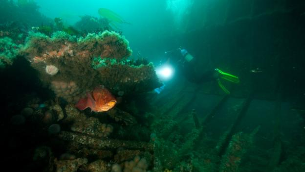 A diver explores the wreck of the Tabarka (Credit: Credit: Gareth Lock/Imagesoflife.co.uk)