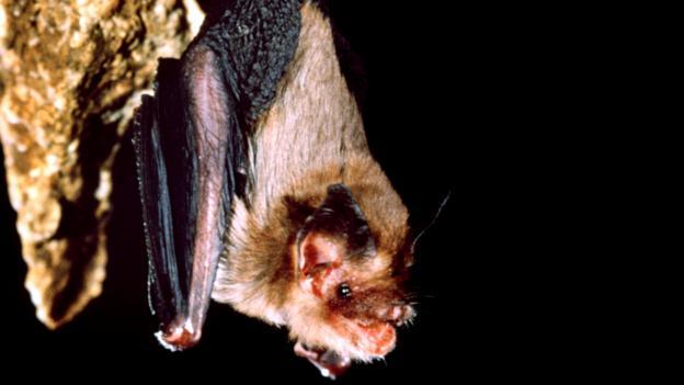 ¿Por qué algunas especies de animales se vuelven diminutas?
