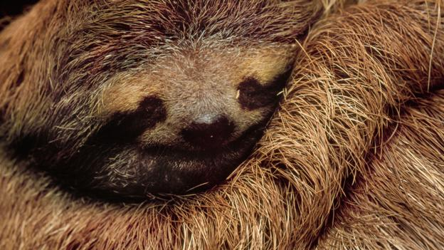 BBC - Earth - What is the sleepiest animal on Earth?