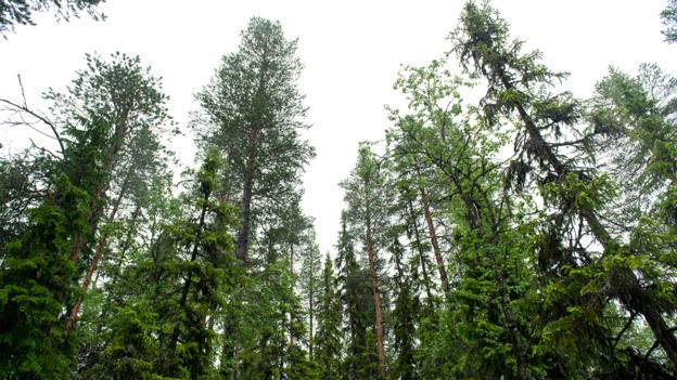Norway's forests grow more every year (Credit: Michael Becker)