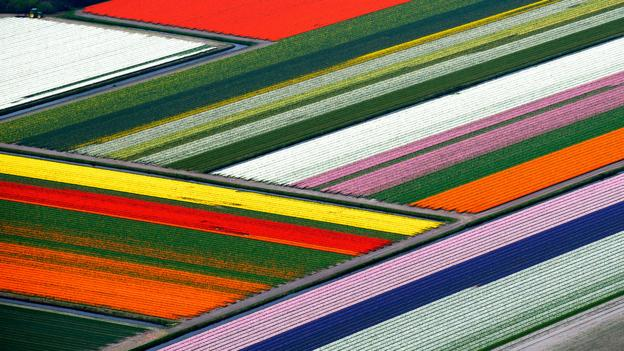 The Holland tulip fields turn into a patchwork quilt from above (Credit: Credit: Hollandluchtfoto/Getty)