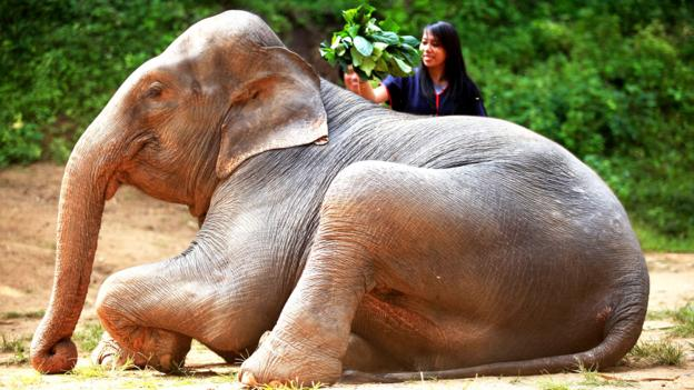 Practicing responsible elephant tourism in Chiang-Mai, Thailand (Credit: Credit: Aileen Adalid)