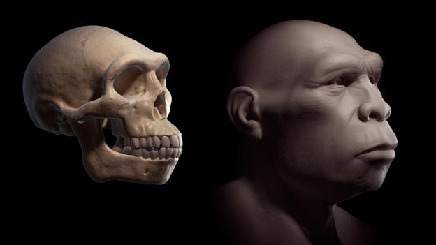 A reconstruction of a Homo erectus (Credit: The Science Photo Company/Alamy Stock Photo)