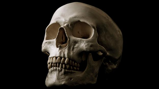 The skull of a human (Homo sapiens) (Credit: jvphoto/Alamy Stock Photo)