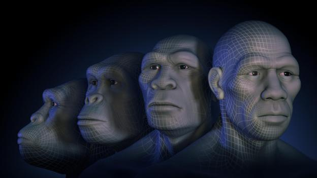 Four hominin skulls (Credit: The Science Picture Company/Alamy Stock Photo)