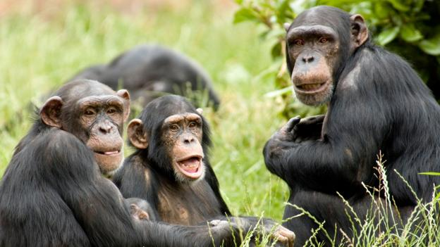 Should chimpanzees count as humans? (Credit: Philip McAllister/Alamy Stock Photo)