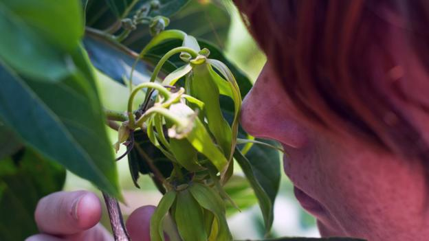 The island is full of scents like those from ylang-ylang flowers (Credit: Credit: Diane Selkirk)