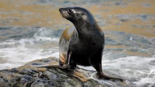 Changes in the Antarctic climate are showing up in the fur seal population, say scientists who have studied the animals for 30 years on the British Overseas Territory of South Georgia.