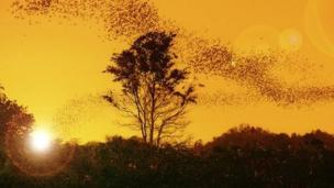 Zoologists find that bats use the pattern of polarised light in the sky at sunset to help them navigate.