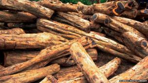 Burning wood to fuel power stations can create as many harmful carbon emissions as burning coal, according to a government report.