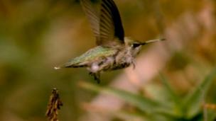 Micro-drones are just starting to catch up with the hovering and flight performance of the tiny hummingbird, say scientists.