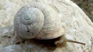 Palaeolithic humans in Spain began eating snails 10,000 years earlier than their Mediterranean neighbours, a study reveals.