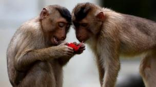 Neuroscientists discover that primate brains show consistent differences according social status