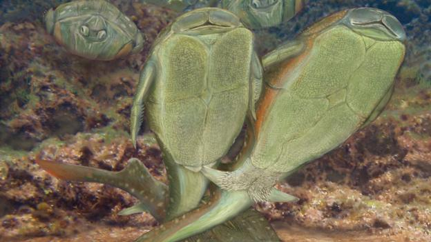 The first animals to copulate were small fish that lived 385 million years ago in what is now Scotland, a study suggests.