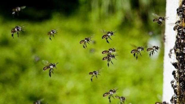 Bee colonies in Brisbane are waging war for months on end, according to a new study, and the victorious swarms are taking over the hives of rival species.
